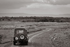 Following the Ranger (Ashwati Vipin - Back after hiatus) Tags: life africa travel light wild vacation blackandwhite holiday love tourism home nature monochrome beautiful grass sunshine animals yellow landscape photography nationalpark nikon kenya outdoor wildlife horizon conservation beautifullight places adventure safari journey naturereserve experience mara savannah wilderness migration majestic masai lovenature wildlifesafari ecosystem biodiversity masaimara wildanimals ecotourism naturephotography rehabilitation riftvalley eastafrica africansafari nikoncamera wildsafari masaimaranationalreserve wildlifephotography animallove nikonusers nationalreserve wildafrica adventureholiday wildlifeconservation africanlandscape nikonlove nikoncameras nikonclub nikond5000 wildlifelove savannahlandscapes nikond5000users nikond500users