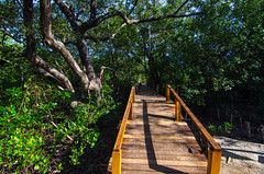 Wood bridge (Chanapai Limsuwankesorn) Tags: blue trees wild summer wallpaper sunlight plant color tree green nature leaves forest thailand natural background sunny jungle environment rayong