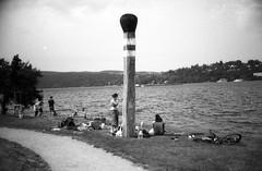 Praktica MTL5 with MIR-1V - Brno Reservoir Trip 06 (Kojotisko) Tags: bw brno creativecommons czechrepublic rodinal czechia mir1b fomapan100 mtl5 prakticamtl5 mir1v brnenskaprehrada mir1v37mmf28 brnoreservoir prehrada05062016