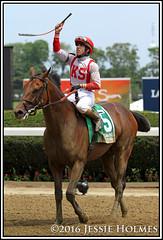 Economic Model (Spruceton Spook) Tags: horses horseracing belmontpark irad economicmodel easygoer