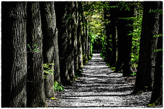 Allee (KJ Photographie) Tags: trees tree green nature forest landscape nikon natur grn landschaft bume baum mnsterland allee gravenhorst