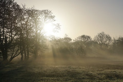 (esmeecadoni) Tags: morning trees light sky sun sunlight mist holland tree nature netherlands silhouette fog backlight forest sunrise landscape photography spring woods europe bokeh outdoor sony minimal simplicity simple minimalistic sunbeams littlethings beautifulearth