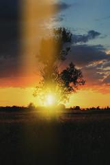 Sunset (Sareni) Tags: sareni serbia srbija vojvodina banat juznibanat alibunar field polje poljana livada utrina tree drvo grass trava light svetlost sjaj sky clouds sun sunset sundown nebo oblaci sunce zalazak boje colors vintage vece evening summer leto may 2014 twop silhouette senke highdynamicrange hdr