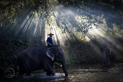 Rays on elephants