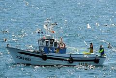 5223-Faenando en la bahia coruesa (jl.cernadas) Tags: pesca barco mar sea marineros gaviotas marieiros embarcacion faenando atlantico corua galicia galiza spain espaa europa europe navegar