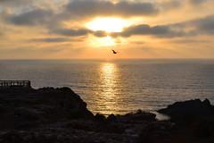 El vuelo de la Gaviota al atardecer (antonsurfisla) Tags: seagull gaviota sunset