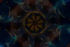 Fall Gracefully.  263-366. (FadeToBlackLP) Tags: camerarotation cameramovement longexposure leaf symmetry cold warm rotation canon tokina light art lightart