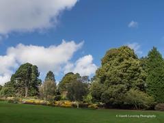 Clyne Gardens 2016 09 30 #27 (Gareth Lovering Photography 3,000,594 views.) Tags: clyne gardens botanical swansea wales flowers trees shrubs park olympus stylus1s garethloveringphotography