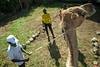 Maralal Camel Derby (12 of 93) (weldonwk) Tags: kenya camel deby maralal