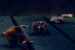 autumn hedgehog (beata goc) Tags: dreamy dromerig rveur soador sognante ameslaria