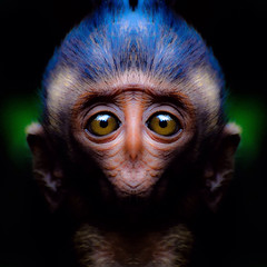 s m i l e r (epiclectic) Tags: reflection animal photoshop mirror design graphic wildlife humor perspective manipulation images symmetry reflect symmetrical mutant twisted enhancement epiclecticcom epiflection epiflectionbyepiclecticcom