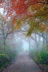 Der Nebel ist die schnste Form der Verschleierung. (Mah Nava) Tags: november autumn tree colors fog germany deutschland colours nebel herbst foggy hazy wald baum farben