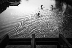 Rowing at Dawn (Lucian Husac) Tags: blackandwhite water dawn rowing simple minimalist