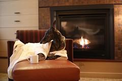 44/52 Fetch me my breakfast (d.rizzle) Tags: coffee portland fireplace bathrobe 52weeksfordogs allisoninn dolcegambino