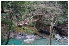 Iya valley vine bridge (WanderingAlice) Tags: new travel bridge tree love nature japan forest river wonder rocks natural pentax country free happiness vine adventure shikoku backpack wandering wander k5 discover discovering