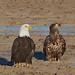 Eagle Chat