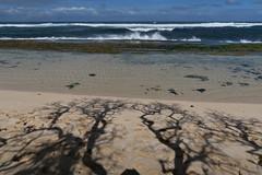 Aloha 2015! Aloha Maui! (AGrinberg) Tags: park shadow beach hawaii waves pacific maui northshore aloha hookipa 42653hookipa