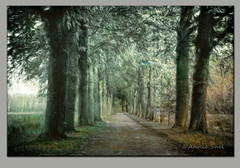 Green Magic (AnnieSnel) Tags: road autumn trees brown green leaves forest leaf whisper path poetic attractive impressionism dreamy editing filters distance atmospheric topaz glamorous enchanting meadowgrass anniesnel