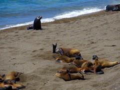 Puerto Madryn-14
