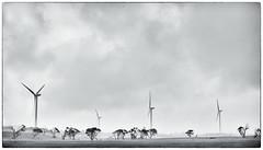 Cape Bridgewater Wind Turbines (Humphrey Hippo) Tags: sky bw windmill monochrome rain clouds au australia victoria explore fujifilm windturbine x100 explored capebridgewater niksoftware silverefexpro silverefexpro2 fujifilmx100