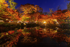 Glitters of Autumn Leaves (45tmr) Tags: longexposure nightphotography autumn night landscape tokyo nightscape pentax 東京 紅葉 夜景 k3 pentaxk3