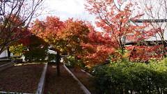(ddsnet) Tags: travel plant japan sony autumnleaves  nippon   autumnal nihon  backpackers  nex       kyotofu mirrorless    newemountexperience nex7