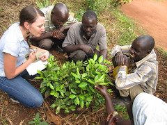 Feed the Future Innovation Lab for Horticulture (FeedtheFuture) Tags: africa uganda innovationlab