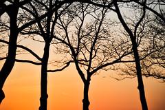battery trees (dalioPhoto) Tags: nyc trees sunset sky orange newyork nature silhouette horizontal digital plane airplane nikon dusk flight gradient d700 daliophoto marcdalioall
