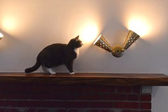Mantel, with cat (A. Drauglis) Tags: black cat woodwork dc washington walnut custom thick mantel