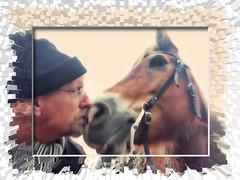 Neus aan Neus (gill4kleuren - 14 ml views) Tags: horse sarah fun saar paard haflinger