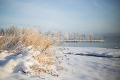 Just Reed (Sunny Herzinger) Tags: winter light snow canon germany bayern 50mm bokeh chiemsee prien 6d canonef50mmf14usm