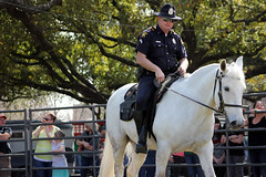 Dallas Police Department's mounted unit at the North Texas Irish Festival (_somaholiday) Tags: horses animals festivals police carol