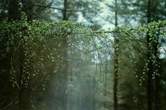 Tibradden (Daire Quinlan) Tags: dublin mountains colour 120 mamiya film fuji walk sunday rangefinder super 100mm 6x9 medium format 23 press 400asa asa400 f35 c41 400h tibradden super23