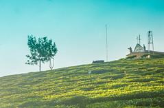 Church in Munnar ([s e l v i n]) Tags: trees india green church nature landscape natural tea jesus kerala greenery teaestate keralatourism keralatravel picturesofkerala selvin