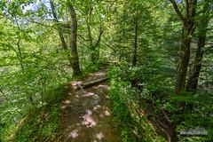 Turkey Backbone (kevin-palmer) Tags: trees green waveland spring may indiana foliage ridge narrow steep dropoff shadesstatepark turkeybackbone pinehillnaturepreserve tokina1628mmf28 nikond750
