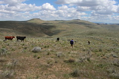 Walking past the local wildlife (rozoneill) Tags: lake oregon river carlton butte desert hiking painted canyon vale trail backpacking saddle blm uplands owyhee honeycombs