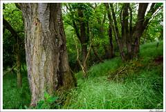 20160526-048_Verschiedenes.jpg (schmilar77) Tags: jahreszeit natur pflanzen landschaft wald baum frhling baumstamm bildbeschreibung