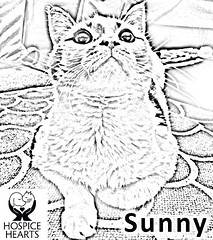 Sunny (Hospice Hearts) Tags: rescue dog cats dogs kids cat illinois feline il foster animalrescue coloring urbana felines champaign volunteer adopt nonprofit hospicehearts wwwhospiceheartsorg