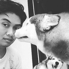 Hey hey hey, rainy day in bali... Its gonna be the best option to stay home and play with them  #siberianhusky #husky #time #sunday #rain #chill #bali #best #mates #dog #breed #season #cool #sweet #friendship #play #male #female (ariyonafebly) Tags: moon square squareformat iphoneography instagramapp uploaded:by=instagram