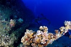 SS Carnatic Wreck (ShaunMYeo) Tags: redsea egypt scubadiving egipto wreck gypten egipte egypte egito egypten  egiptus egipt underwaterphotography msr  misr coralreefs misir exipto masar  egypti egiptas mesir ikelite egyiptom  egyptaland misri  egipat egipti ipte ehipto    egjipt egiptujo    misira sscarnatic        egitto   ejipta  eittu ihipa   egepeta