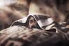 Hide and seek (Giulia Cibrario Fotografia) Tags: sleeping dog pet home animal animals hearts photography nap heart sweet sleep indoor pillow sofa hide animali mydog nascondino cuscini sonnellino coperte
