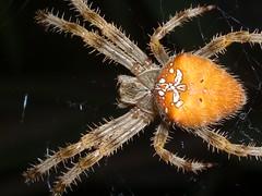 Predator (zuhmha) Tags: araigne monstre