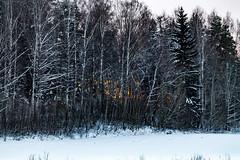 Sunset (Jori Samonen) Tags: trees winter sunset snow finland helsinki viikki
