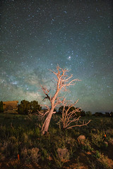 ([ raymond ]) Tags: newmexico southwest tree nature beautiful night stars dead outdoors desert awesome planets universe milkyway americansouthwest img9654