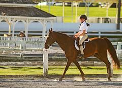 IMG_2573 (SJH Foto) Tags: horse show hunter jumper class girls teenage teen riders action shot tweens