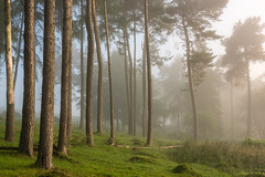 Quothquan Woods (Dylan Nardini) Tags: trees summer mist fog forest scotland woodlands lanarkshire 2016 thankerton quothquan