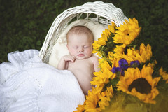 Harlow (Jean Loper) Tags: newborn baby sunflowers babygirl portrait outdoors jeanloperphotography