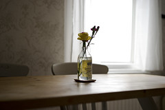 Table Flowers (jamiethompson01) Tags: light window chair bench wood top table bottle flower stives devon whitstable beach uk unitedkingdom august sony a7 zeiss 55mm 18f oysters