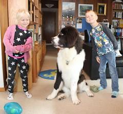 My dog (Zip) with my granddaughter, and grandson (Bjørn Steiner) Tags: midogzipwithmygranddaughter andgrandson nova zipandviktor landseer
