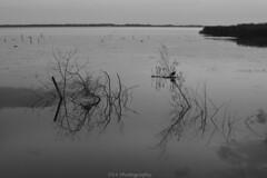 Reflect on reflection (dennislorenzetti (D14)) Tags: lake lago blackandwhite biancoenero nature natura beautiful reflections riflesso water acqua relax peacefull